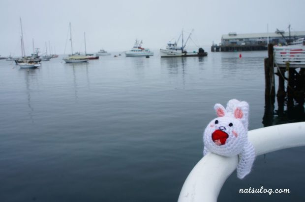 Cony on the boat